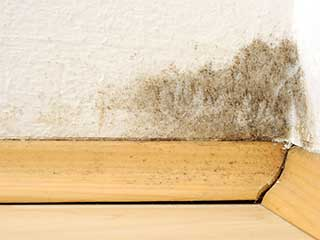 Cheap Mold Removal | Mission Viejo