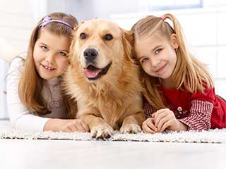 Cheap Pet Hair Removal | Mission Viejo